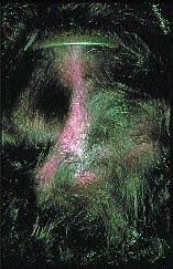 Химиопрепарат от которого выпадают волосы
